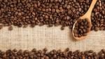 TT cà phê ngày 16/3: Giảm mạnh thêm 500 đồng/kg