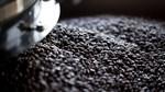 TT cà phê tuần 24: Giảm 1.000 đồng/kg, nhu cầu chậm lại