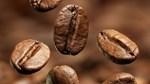 TT cà phê ngày 15/10: Giá hồi phục sau hai phiên giảm giá