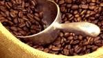 TT cà phê ngày 25/02: Giá trong nước đạt mức cao nhất 33.000 đồng/kg