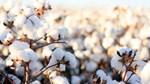 Tradingcharts: Giá nông sản kỳ hạn thế giới ngày 04/3/2021