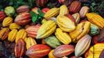 Tradingcharts: Giá nông sản kỳ hạn thế giới ngày 03/3/2021