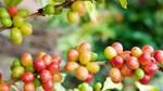 TT cà phê ngày 05/3: Giá giao dịch ở mức 31.900 – 32.500 đồng/kg