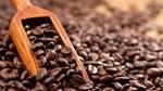 TT cà phê tuần 46: Chịu áp lực nguồn cung gia tăng từ vụ thu hoạch mới