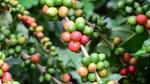 TT cà phê ngày 10/4 và cập nhật thông tin mới về dịch Covid-19