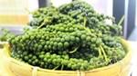 TT hạt tiêu ngày 24/7: Gia Lai giảm giá về mốc 44.000 đồng/kg