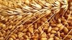 Giá nông sản và kim loại thế giới ngày 3/7/2020
