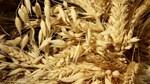 Giá nông sản và kim loại thế giới ngày 04/12/2020