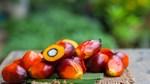 Ấn Độ giảm thuế nhập khẩu cơ bản đối với dầu thực vật thô xuống 0%