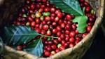 Cà phê châu Á: Giá tại Việt Nam giảm