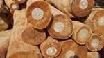 Kim ngạch xuất khẩu gỗ tăng và dự báo