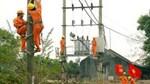 EVN HANOI chủ động các giải pháp bảo đảm hành lang lưới điện trước mùa mưa bão
