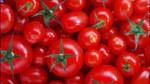 Cà chua: Giá giảm mạnh và khó tiêu thụ