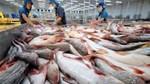 Giá cá tra tăng nhẹ