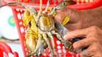 Giá cua biển tăng từ 20.000 – 40.000 đồng/kg