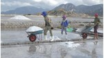 Ninh Thuận: Giá muối tăng mạnh, diêm dân không còn muối để bán