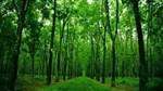 Xu hướng tất yếu phát triển rừng cao su theo hướng bền vững