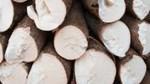 Xuất khẩu sắn tăng trở lại sau hai tháng giảm liên tiếp