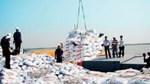 Quý I/2017, xuất khẩu phân bón tăng cả lượng và trị giá