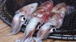Xuất khẩu mực, bạch tuộc sang hầu hết thị trường chính tăng