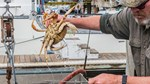 USDA hỗ trợ 530 triệu USD cho ngành thủy sản Mỹ