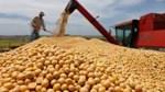 Nguồn dự trữ đậu tương của Trung Quốc sẽ giảm đáng kể trong tháng 3/2020