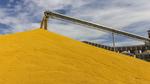 USDA dự báo triển vọng ngũ cốc thế giới trong tương lai