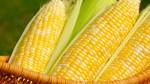 Xuất khẩu ngô của Brazil giảm do sự chậm trễ trong thu hoạch