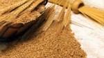 Giá ngũ cốc thế giới hôm nay 17/6: Đậu tương thấp nhất 2 tháng, ngô và lúa mì tăng