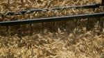 Giá ngũ cốc hôm nay 17/9: Lúa mỳ và đậu tương tăng, ngô giảm