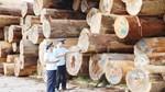 Sẵn sàng phục hồi sản xuất, các doanh nghiệp ngành gỗ tăng cường nhập khẩu nguyên liệu