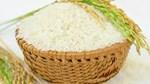 Thị trường lúa gạo ngày 20/10: Giá tăng nhẹ