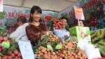 Hội nghị kết nối, xúc tiến tiêu thụ vải thiều Thanh Hà và nông sản tiêu biểu tỉnh Hải Dương