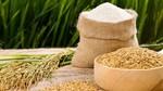 Giá lúa gạo hôm nay 24/9: Gạo nguyên liệu và thành phẩm tăng nhẹ
