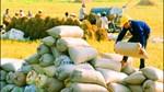 Xuất khẩu gạo có khả năng chỉ đạt 5 triệu tấn