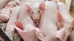 Giá lợn ở Đồng Nai giảm mạnh