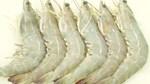 Giá tôm và sản lượng tôm châu Á đang tăng theo nhu cầu