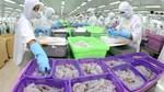 Xuất khẩu thủy sản 8 tháng đầu năm 2020 giảm ở hầu hết các thị trường