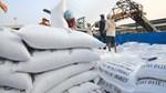 Lô gạo thơm đầu tiên lên đường sang Châu Âu theo Hiệp định EVFTA