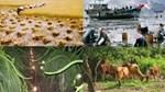 Quyết định 03/2021/QĐ-TTg về thực hiện chính sách hỗ trợ bảo hiểm nông nghiệp