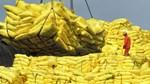 Xuất khẩu gạo tháng 4/2021 tăng tháng thứ 2 liên tiếp