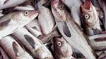 Xuất khẩu thủy sản 4 tháng đầu năm 2021 tăng ở hầu hết các thị trường