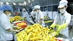 Khối lượng ngô nhập khẩu 8 tháng năm 2021 giảm nhưng kim ngạch và giá tăng cao