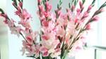 10 loài hoa mang lại giàu sang, phú quý, tài lộc nên trưng trong ngày tết