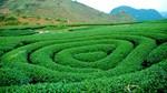 9 món đặc sản nức tiếng ở Mộc Châu