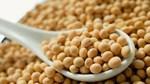 Thị trường NL TĂCN thế giới ngày 23/3: Giá đậu tương giảm