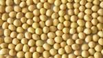 Thị trường TĂCN thế giới ngày 29/9/2020: Giá đậu tương tăng