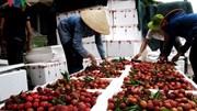 Xuất khẩu rau quả sẽ gặp khó vì cuộc chiến thương mại Mỹ - Trung