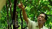 Bài 1: Gia đình sản xuất thủ công chocolate đầu tiên ở Việt Nam