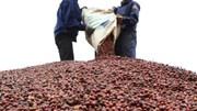 Giá các loại nông sản biến động trái chiều